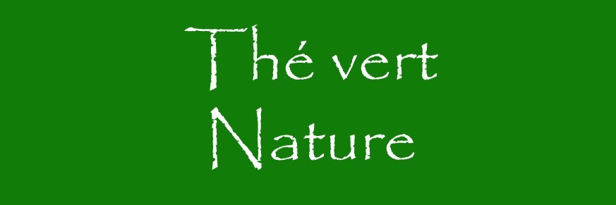 Thé vert nature Bio